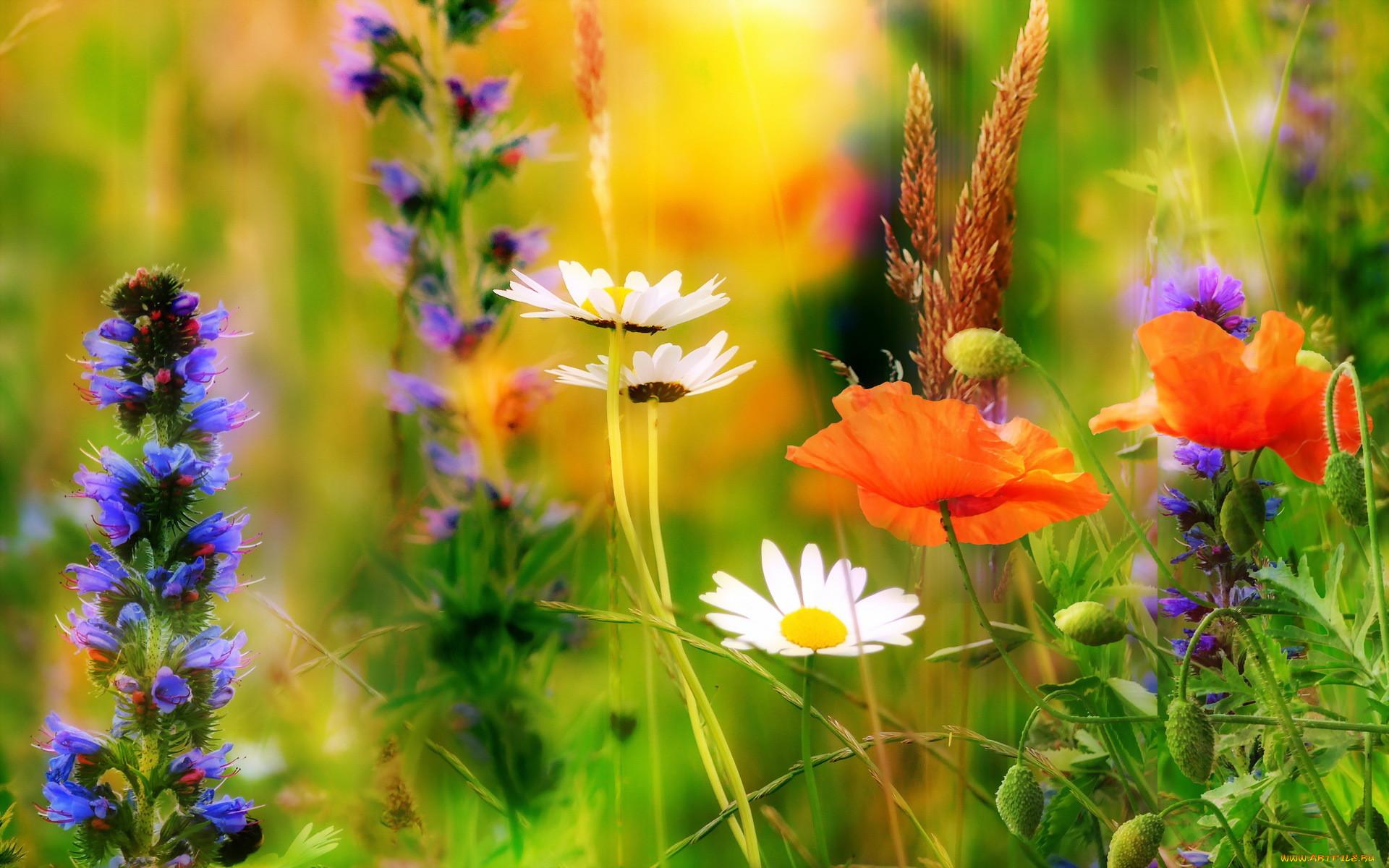 фото деревянная фото картинки полевые цветы летом супруги